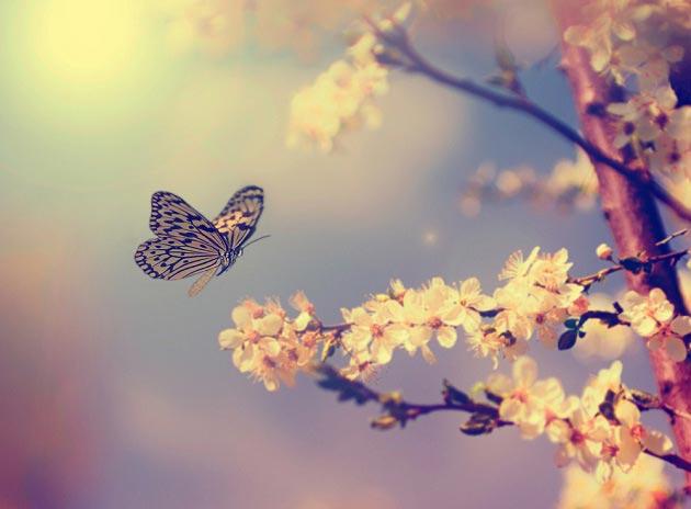 На тему природы с бабочкой