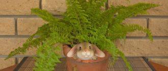 Папоротник в горшке с кроликом