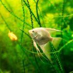 Пресноводный аквариум с рыбками